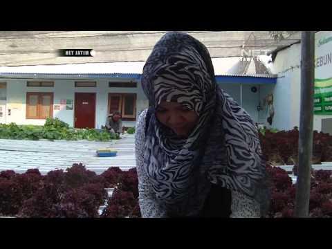 Bertani Hidroponik di Surabaya - NETJATIM