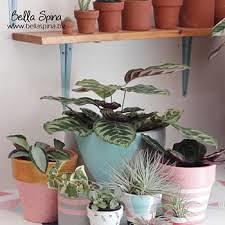 Sarjana Hukum Ini Jualan Kaktus Beromzet Rp 70 Juta/Bulan